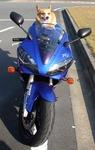 05.11.12ラルとバイク�@(300).JPG