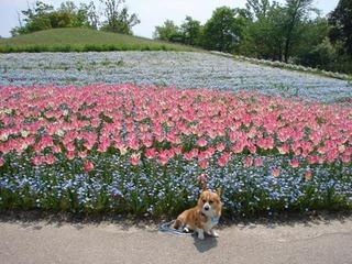 07.4.26まんのう公園 (12)(500).JPG