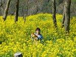 08.3.24菜の花 (47)(700).jpg