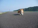 08.4.22下田の堤防 (16)(700).JPG