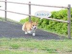 08.5.25下田の公園 (11)(700).jpg