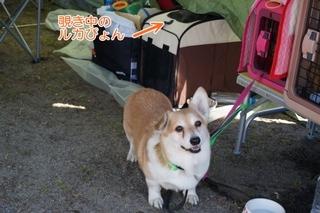16.3.26高知大会 (10)(500)..JPG