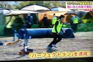 16.3.28テレビ (1)(500).jpg