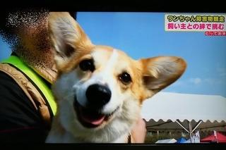 16.3.28テレビ (3)(500)..jpg